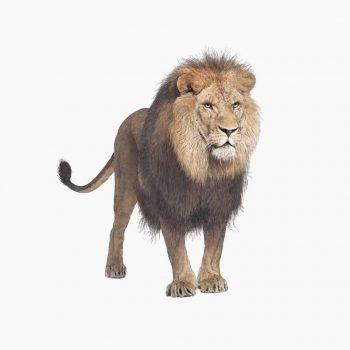 leeuwww